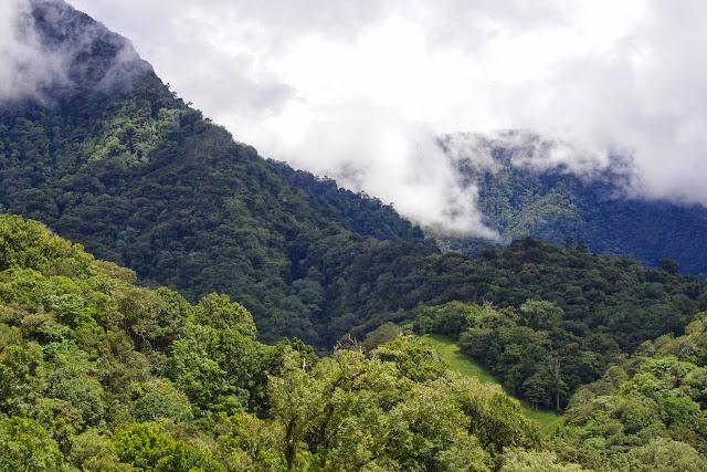 La Forêt des nuages. Mount Totumas, 1900 m (Chiriquí, Panamá), 22 octobre 2014. Photo : J.-M. Gayman