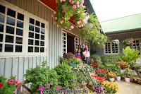 Mê mẩn ngôi nhà gỗ tràn ngập hoa trên cao nguyên đá Hà Giang - Trang trí nội thất