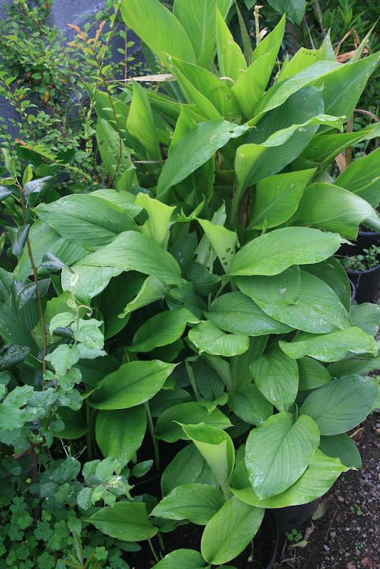 Futur jardin d'orchidées!!! IMG_3592