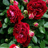 who is Jisha Abhilash contact information