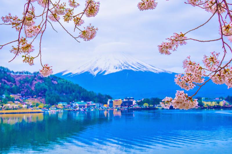 河口湖 桜 写真2