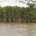 Flora del río Atrato