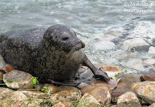la Bioparc vedem tot felul de animale si asistam la hranirea lor - focile sunt cele mai simpatice