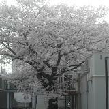 2014 Japan - Dag 3 - teun-SDC10266.JPG