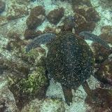 galapagos - Galapagos_FB_2-123.jpg