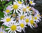 シッコゴ公園に咲くコスモス 2011-10-28T01:10:14.000Z