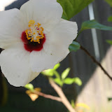 Gardening 2012 - IMG_3179.JPG