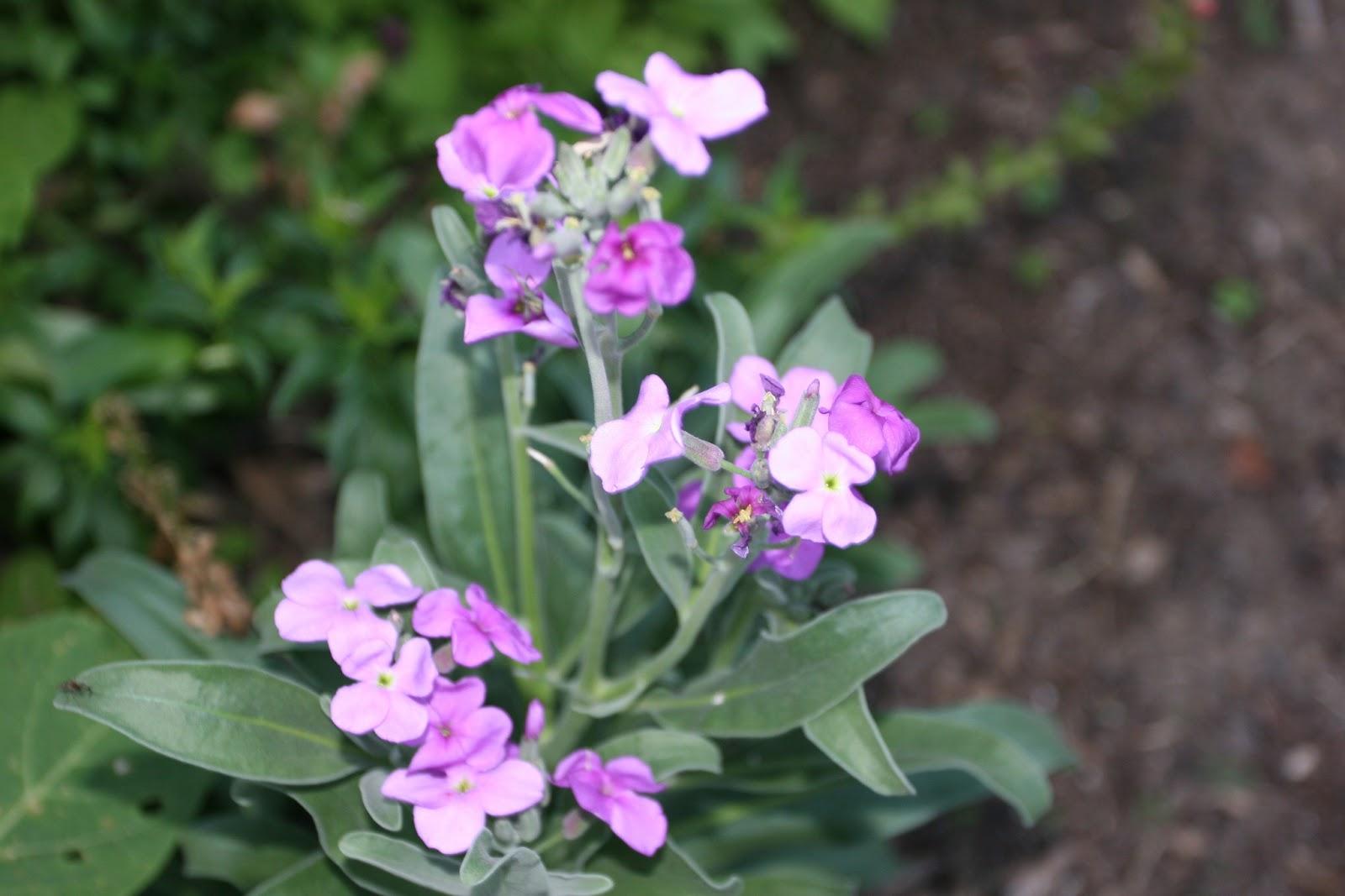 Gardening 2012 - IMG_2733.JPG
