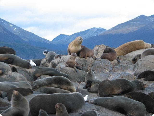 tierradelfuego_focas