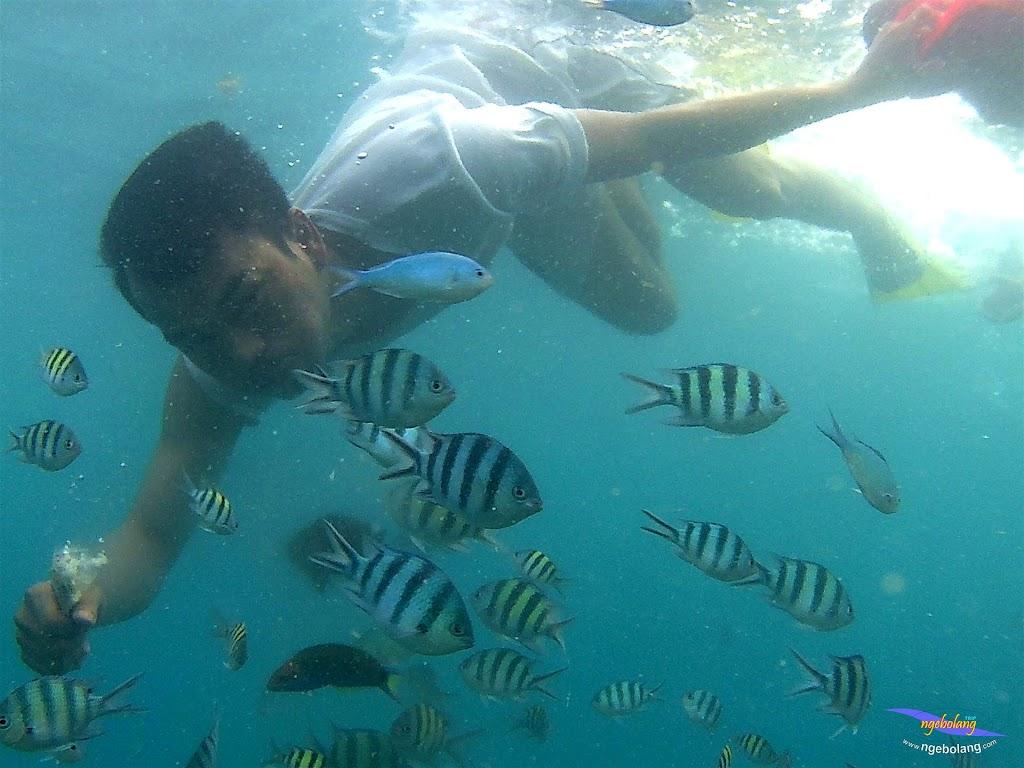 pulau pari 050516 GoPro 22