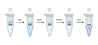 DNA extraction steps