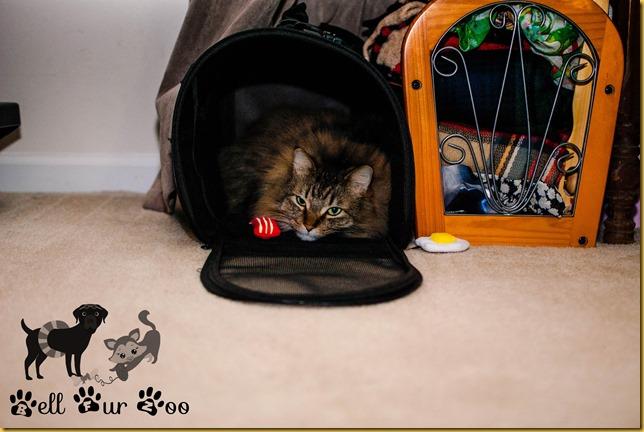 Matilda Flashy Friday (copyright Bell Fur Zoo)