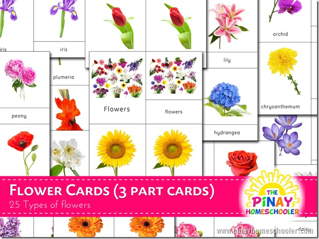 Flower cards copy