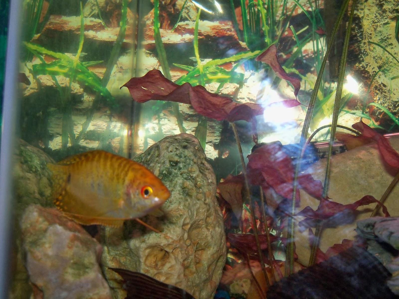Fish - 115_7881.JPG