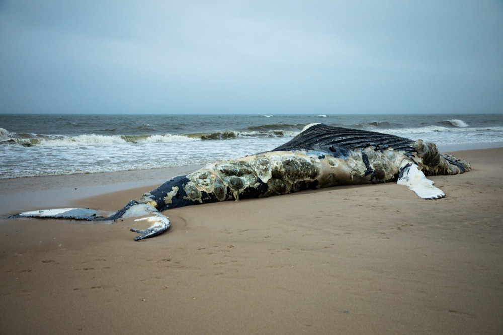beached-whale-1