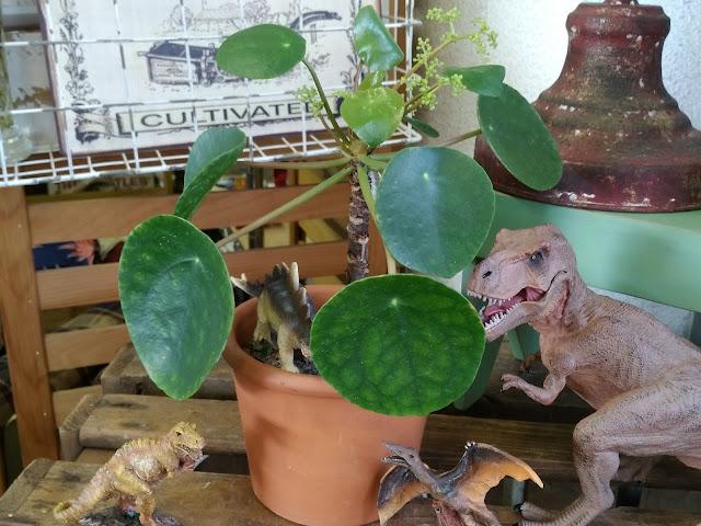 ぺレア ペペロミオイデス,恐竜,ダイナソー,フィギア,ティラノザウルス