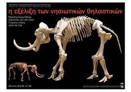 Comparación entre un mamut adulto y un elefante enano.