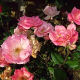 Gardening 2015 - 116_7631.JPG