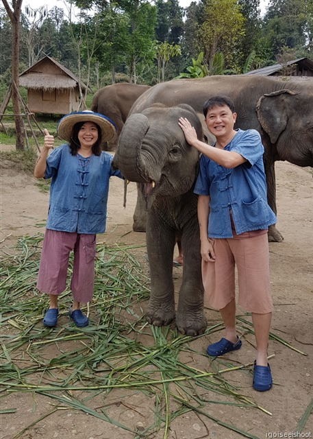 """Everyone is charmed by """"Spicy"""" Lanna, the mischievous 2 year old baby elephant at the Lanna Kingdom Elephant Sanctuary"""