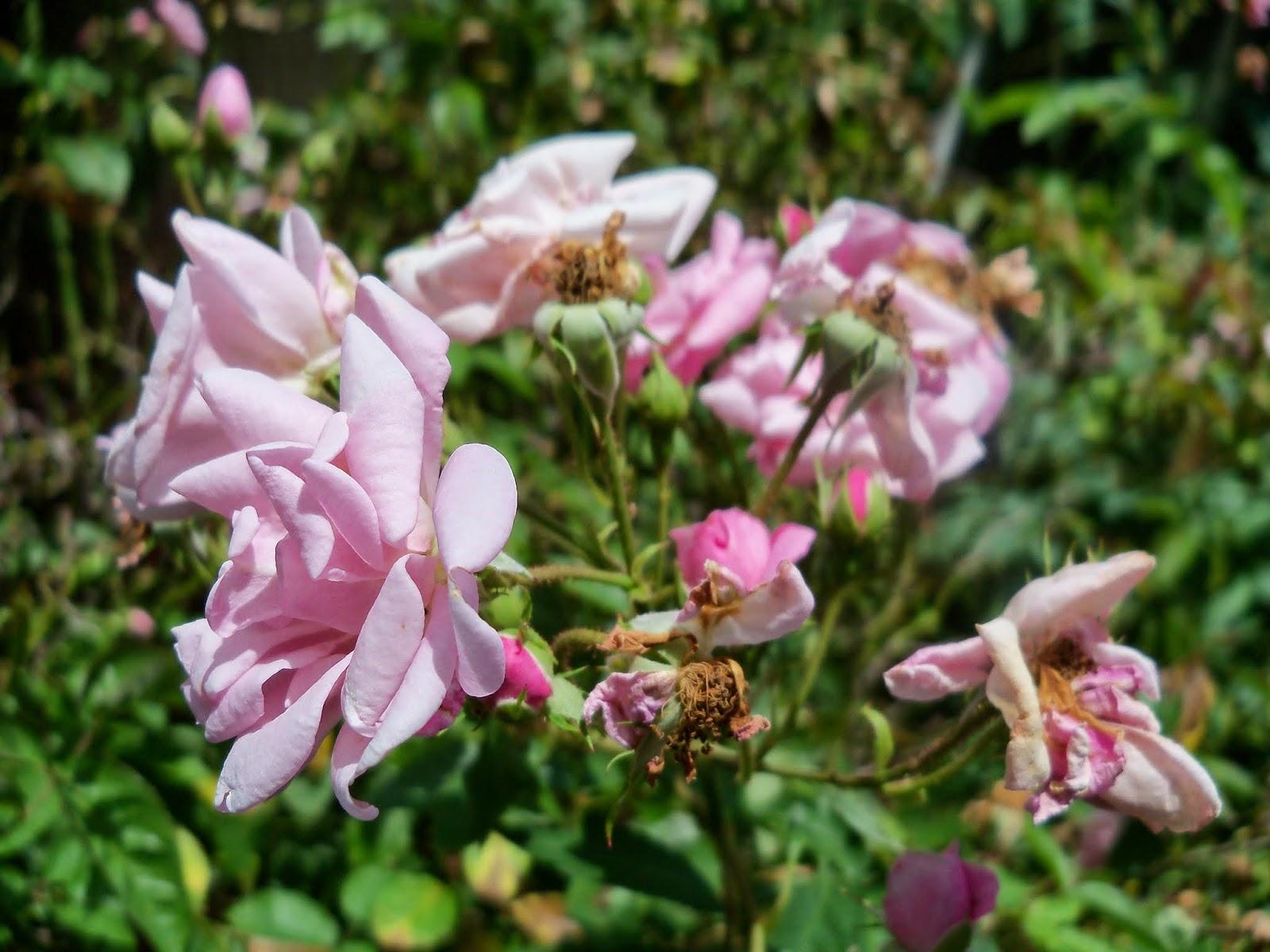 Gardening 2014 - 116_2983.JPG