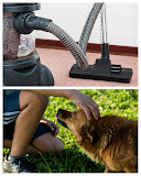 Business Idea - Chimney Sweep, Cleaning Service, Dog Walking
