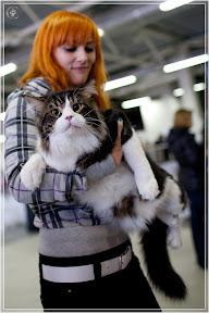 cats-show-24-03-2012-fife-spb-www.coonplanet.ru-072.jpg