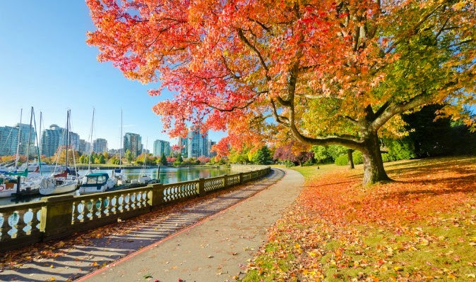 Cây lá Phong du lịch Vancouver, Canada
