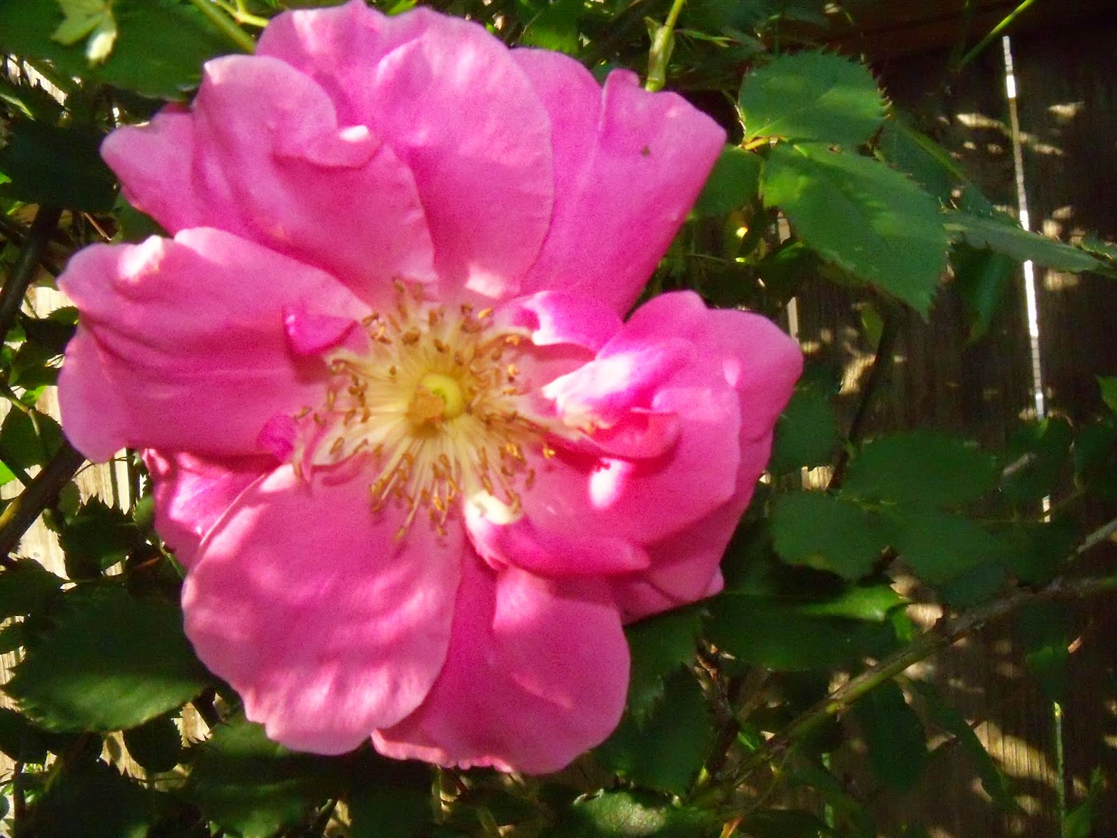 Gardening 2015 - 116_7640.JPG