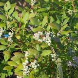 Melissa Jones Schoolyard Habitat Garden - Image%2B2.jpg