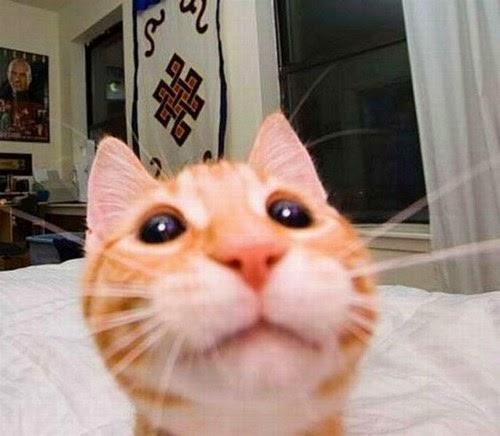 selamat siang sobat BLOGGER JEMO LINTAK sesudah admin posting ihwal  kucing-kucing selfie yang lucu banget