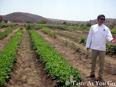 Chef Enrique Silva with Rows of Arugula at Los Tamarindos in Los Cabos, Mexico - Photo by Taste As You Go
