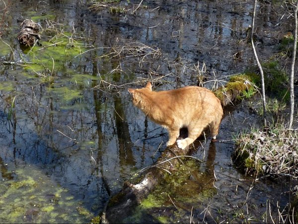 cat vs water