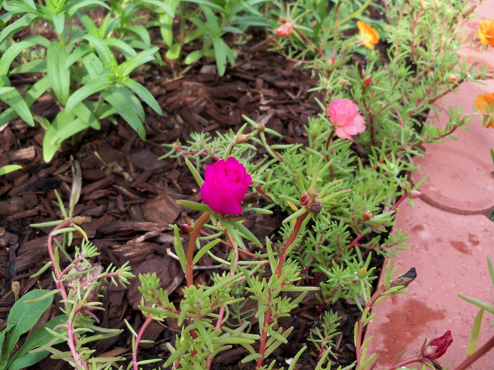 Gardening 2010, Part Two - 101_2204.JPG