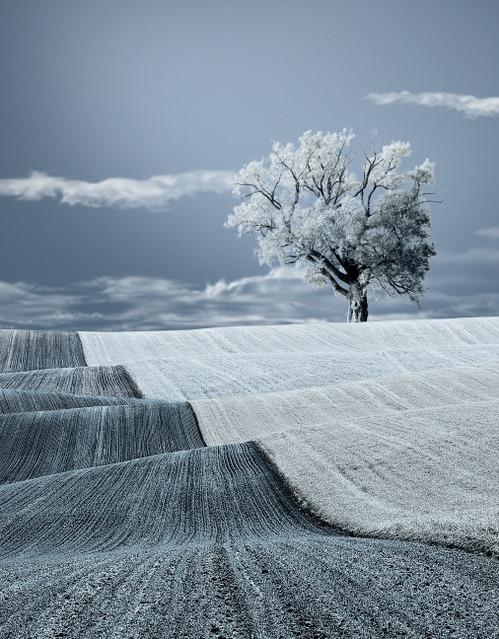 [snow+field%5B5%5D]