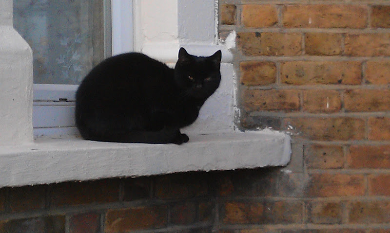 Cats of Tooting Charlmont Road