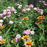 Gardening 2010, Part Three - 101_4373.JPG