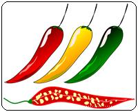 คำศัพท์ภาษาอังกฤษ_chili_Vegetable