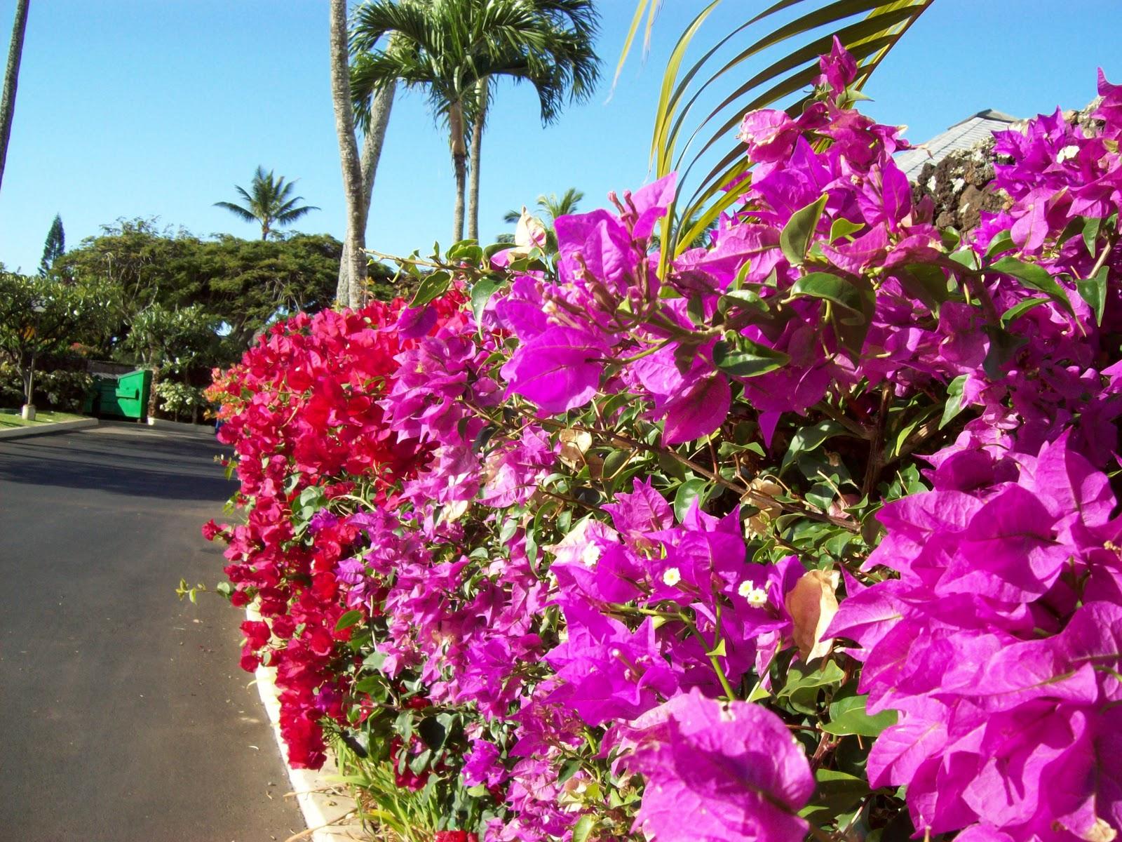 Hawaii Day 6 - 100_7617.JPG
