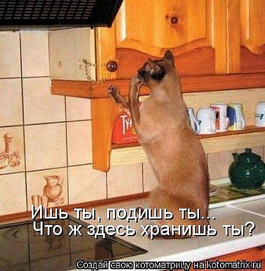 1411716318_kotomatricy-1