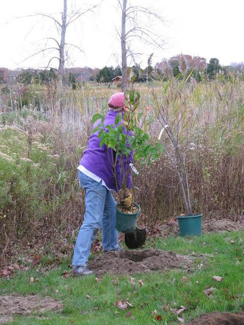 Hammo Planting - Shannon Schiesser - IMG_4888.JPG