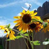 Gardening 2010, Part Three - 101_4499.JPG