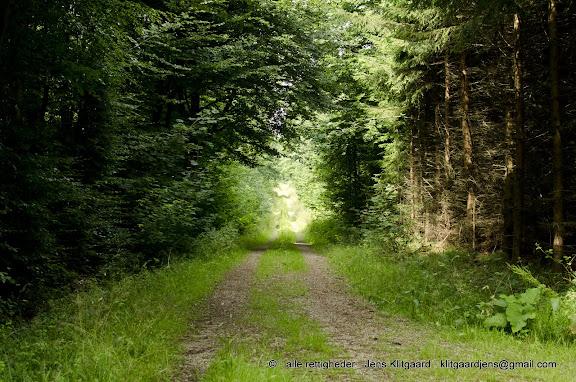Skovvej i solskin i Østerskoven ved Haderslev.
