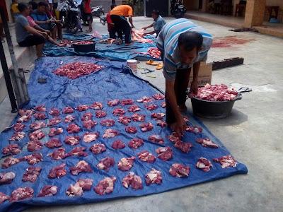 Daging sapi dibagi untuk 250 penerima