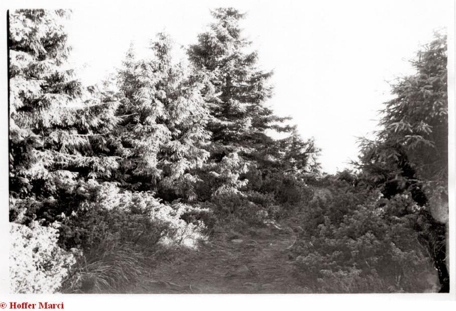 Székelyzsombor 2004 - img25.jpg