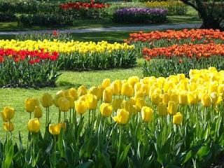 Tulipes au Parc de l'Indépendance à Morges