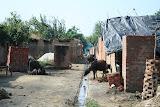 Amarpurkashi village