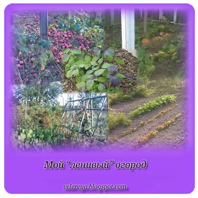 Мой ленивый осенний огород