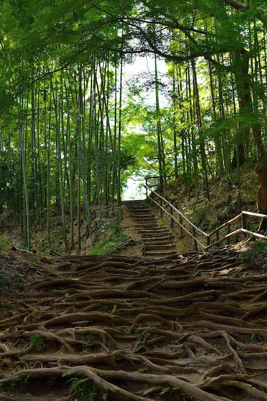 juuriportaat + bambuu