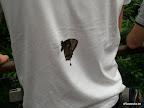 Schmetterling auf Michi