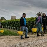 Petites vendanges 2017 du chardonnay gelé. guimbelot.com - 2017-09-30%2Bvendanges%2BGuimbelot%2Bchardonay-209.jpg